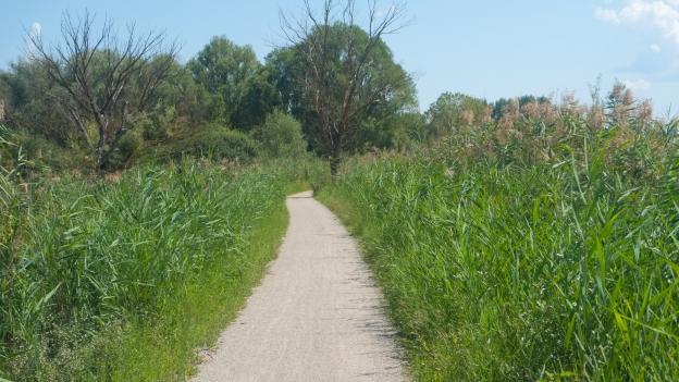The Sentiero della Bonifica cycleway (Toscana)