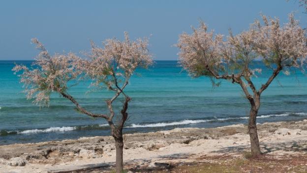 Puglia coastline