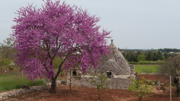 Trullo near Alberobello