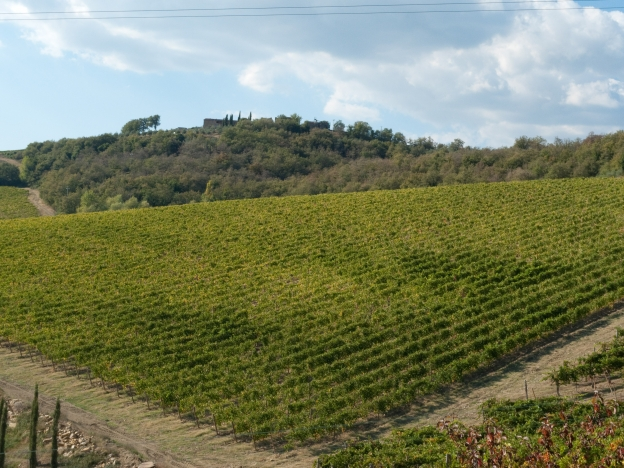 In the Chianti countryside