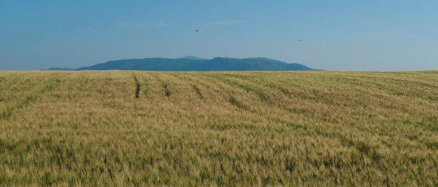 Fields near Pitigliano (Toscana)