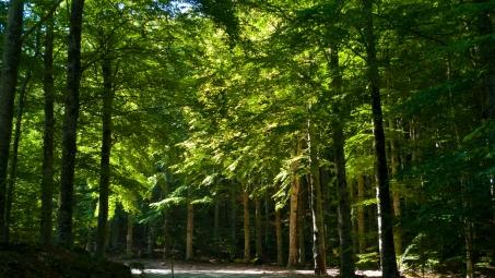 Gran Tour della Maremma - the road to Abbadia di San Salvatore