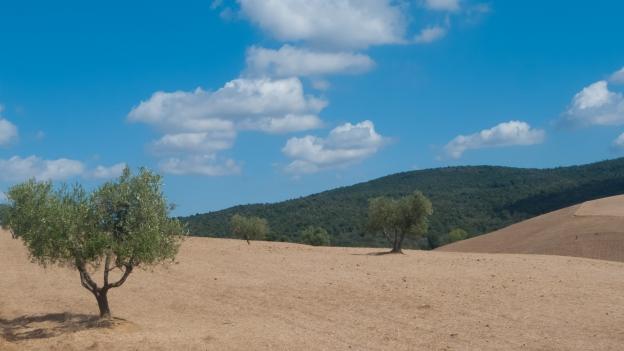 Gran Tour della Maremma near Magliano in Toscana