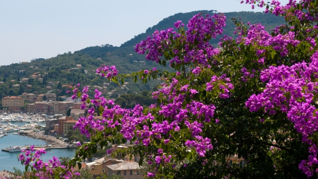 Ligurian coastline and bougainvillea
