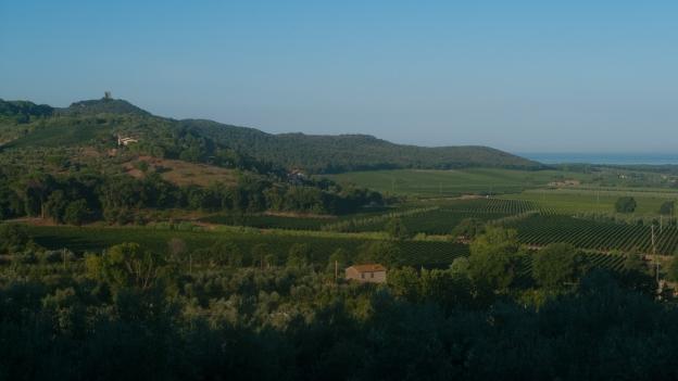 The Maremma near Castagneto Carducci