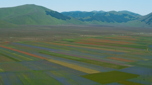 Wildflowers on the Grand Piano di Castelluccio in the Monti Sibillini