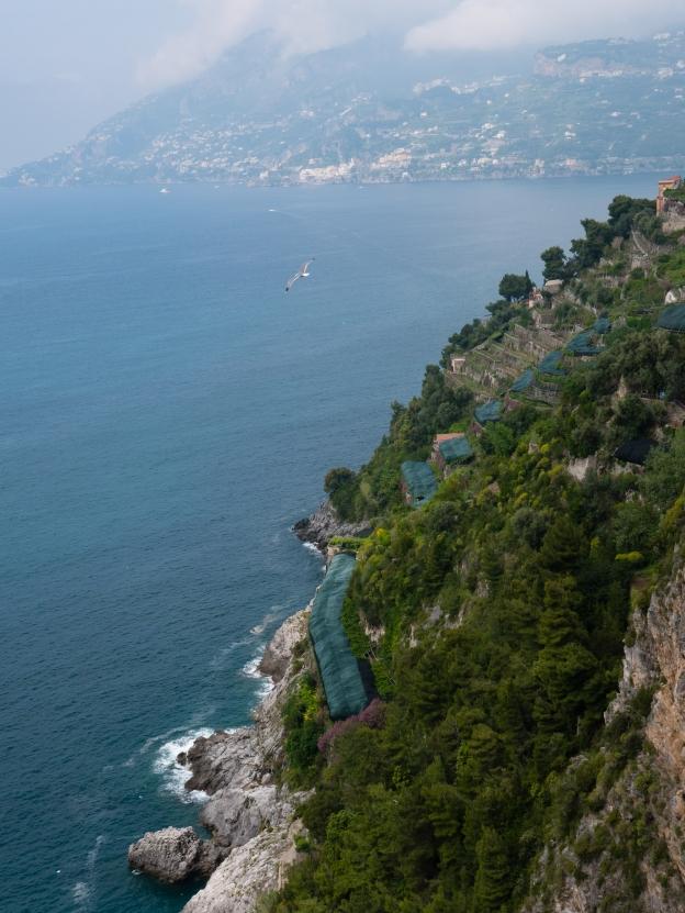 Lemon Tour Amalfi Coast