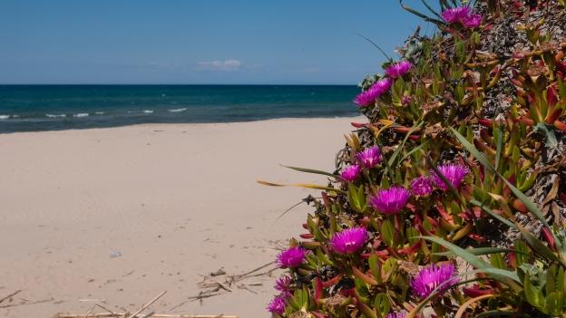 Marina di Sorso: sand dunes