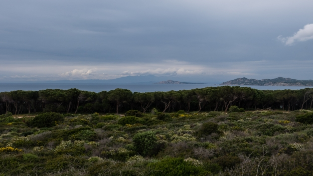 Coastal pineta on the north west coast of Sardegna. The coast of Corsica is in the distance