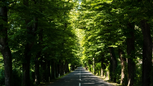 Tree-lined road out of Kobarid heading for Cividale del Friuli
