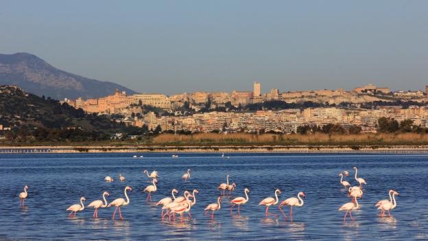 Flamingos in the Stagno di Molentargius park. The city of Cagliari is in the background.