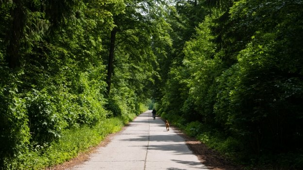 Cyclist (and dog)  on the München-Venezia cycle route near Geretsried