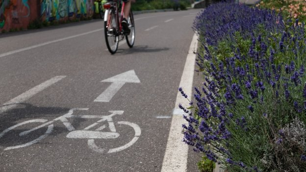Flowers beside the cycleway on the way into Bozen (Bolzano)