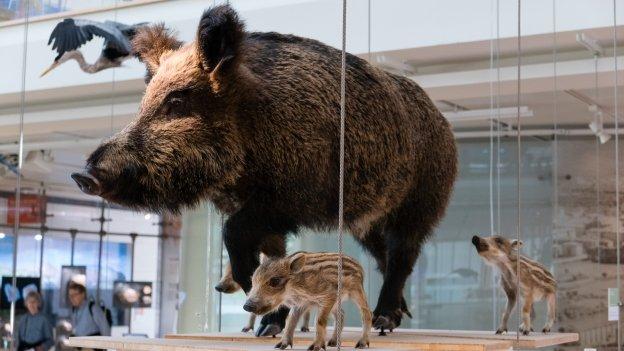 Trento: Museo delle Scienze (MUSE)