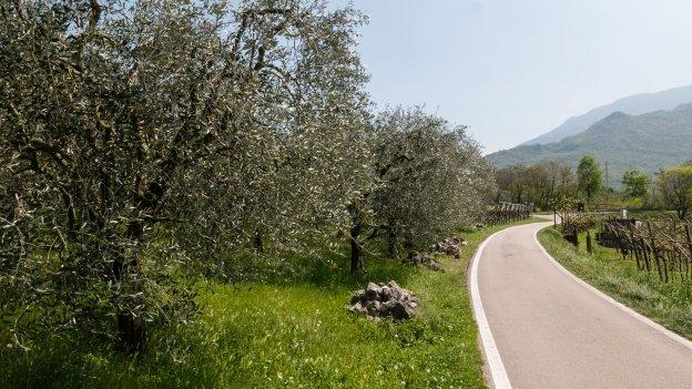 The cycleway between Mori and Torbole on the Lago di Garda