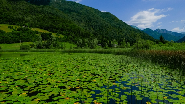 Water lilies on the Lago d'Ampola